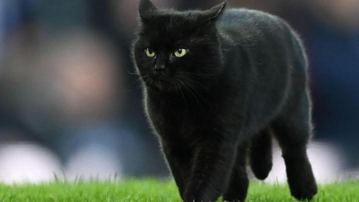 Crna mačka stvorila probleme u Liverpoolu