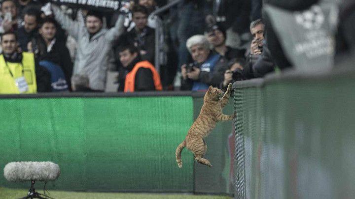 """UEFA pokrenula disciplinski postupak zbog """"zvijeri"""" na Vodafone Parku"""