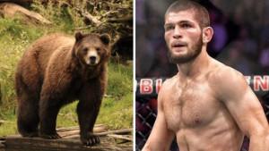 Khabibov revanš sa medvjedom je nasmijao sve