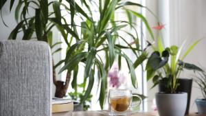 Šta će se desiti vašem tijelu ako budete pili zeleni čaj svaki dan?