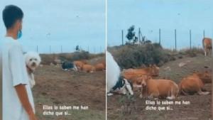 Setienov sin otišao na ranč kako bi pitao krave da li će Barcelona osvojiti Ligu prvaka