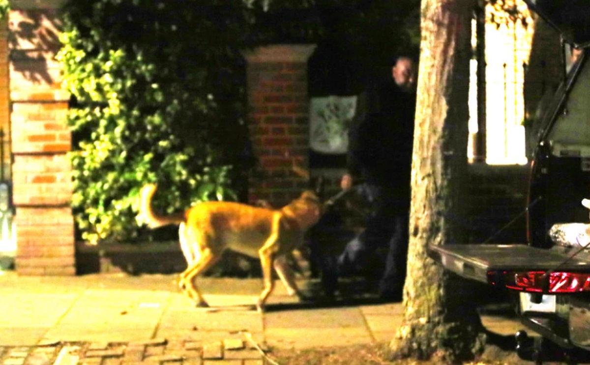 Od Ozila ni traga ni glasa tokom vikenda, ali imovinu mu štiti posebno osiguranje s psima čuvarima
