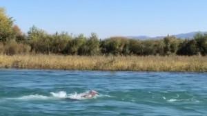 Plivanje uzvodno u ledenoj rijeci: Jednom imate pravo pogoditi o kome je riječ...