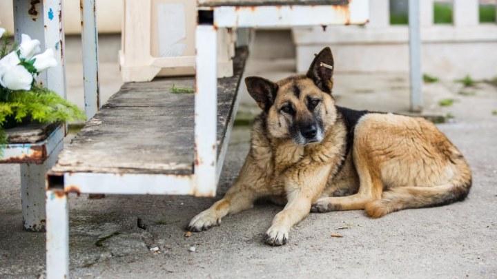 Dogs Trust uputio javni poziv zbog stanja u Prači