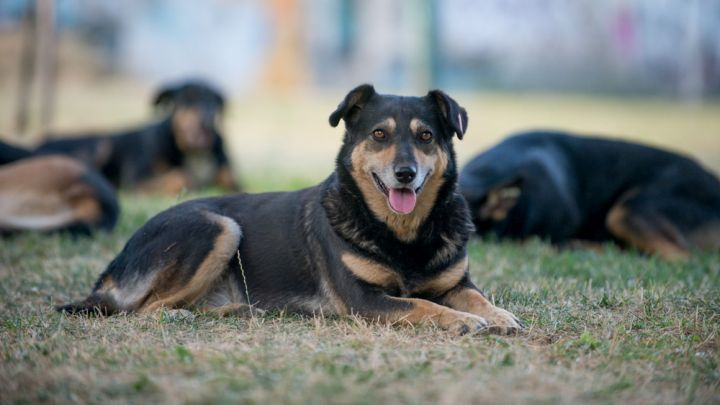 Besplatna sterilizacija za vlasničke pse Tuzlanskog kantona