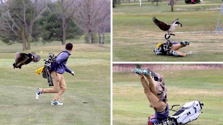 Komične scene sa golf terena zapalile internet