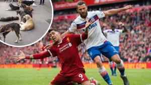 Lutalice iz BiH završile u luksuznom domu fudbalera Burnleyja